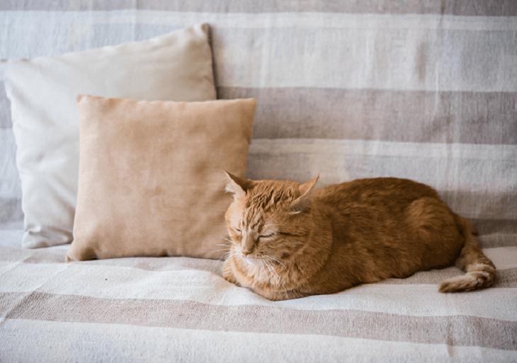 Mačka oddychuje na pohovke