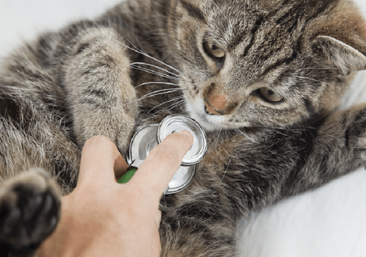 Mačka na kontrole u veterinára