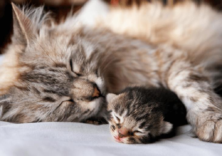 Mačka s mláďaťom odpočíva