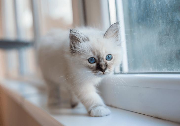 Veľkou udalosťou pre všetkých členov rodiny je príchod novej mačičky –  mačiatka. Mačky majú svoje špecifiká preto je dobré pred kúpou mačičky  naštudovať čo ... b1c7d6b0e2d