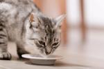Čím nekŕmiť mačku  Nevhodné krmivo pre mačky - Mačička.sk f2c17262a9c