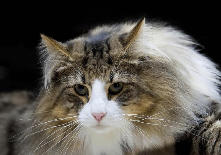 Veľký, ale mačička
