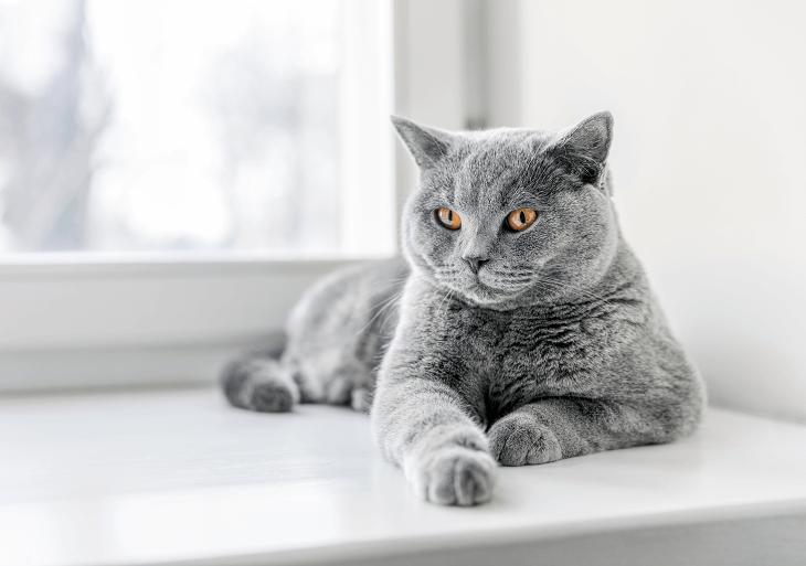Ľudia majú však sklony prispôsobovať si veci podľa svojho vkusu a tejto ľudskej  vlastnosti neunikli ani mačky. 39b245d7b35